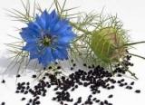 У Криму вивели новий сорт чорного кмину, яким лікують будь-які хвороби