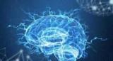 Фізична сила може впливати на розумові здібності, – результати дослідження